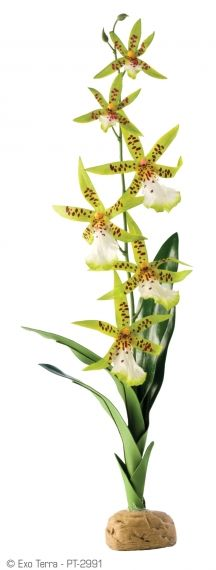 Exo Terra Rainforest Plant Spider Orchid РТ-2991